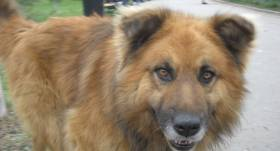 Peste 60% dintre români împotriva eutanasierii maidanezilor, doar 7% ar adopta un câine