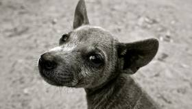 Animal lovers fined instead of the responsible authorities