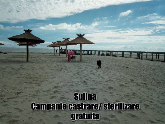 Lupta pentru bunastarea si sanatatea animalelor din orasul Sulina continua