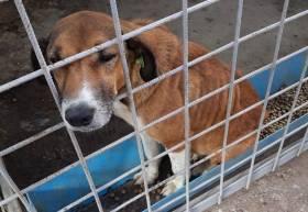 Lupta pentru drepturile animalelor continua - Abuzuri facute de Consiliul Local al Municipiului Onesti